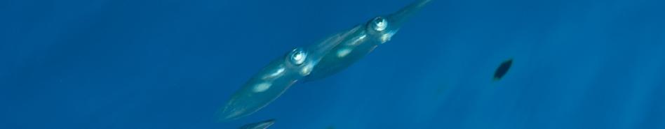 [2014/2015] Mer