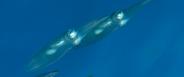 [2014] Mer